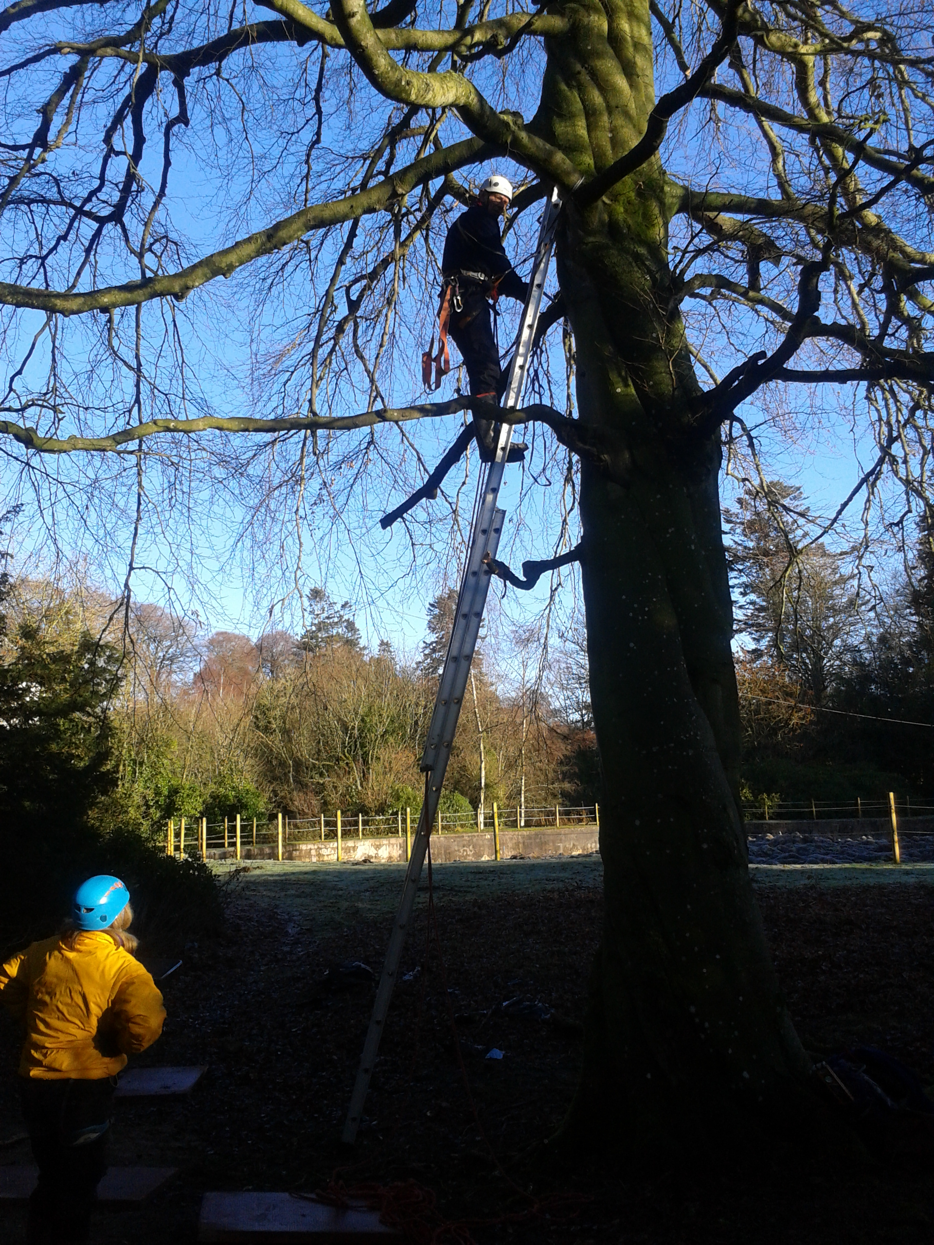 A Mapa Scotland member cutting branches from a tree next to the site for a new workshop