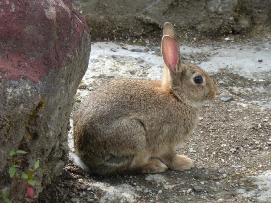 Rabbit visiting map